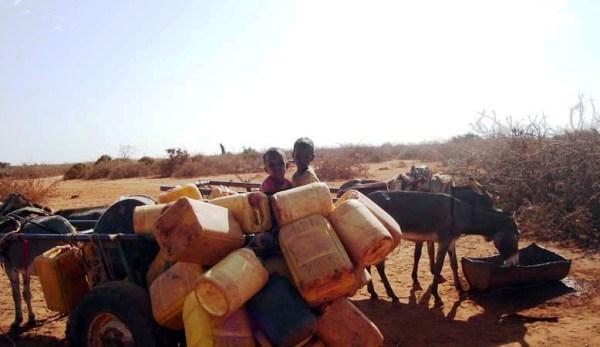 SOMALILAND BIYO LA'AAN IYO ABAAR SAAMAYSAY DEGMADA DACARTA 2018